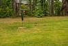 _KBD8286 2016-07-03 Ducks at bird feeder