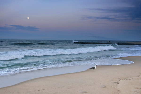Asbury Moonlight Surf