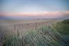 Belmar Grasses DSC_2934