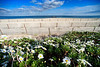 Shast Daisy Beach View Belmar DSC_4413