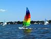 Hobie and Sails