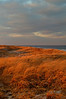Orange Dunes DSCF3394