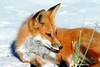 Foxy Lady 2 @400 12x18 DSCF8801