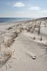 Lavallette Dune & Shell DSC_9027