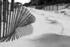 Dune Fence Shadows & Walk B&W DSCF0980T