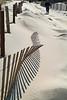Dune Fence & Bike DSCF0984