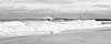 Manasquan Ripper & Gull BW 12x30 DTP_5535