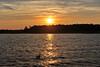Gull Sunset B bay DSC_3587