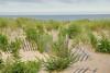 Ocean Grove Dunes DSC_9201