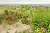 OG Dunes & Pinks 2 DSC_9254