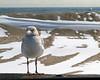 Seagull Pose 8x10  DSCF6106