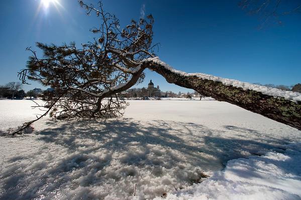St Catherines Fallen Tree DSC_3072