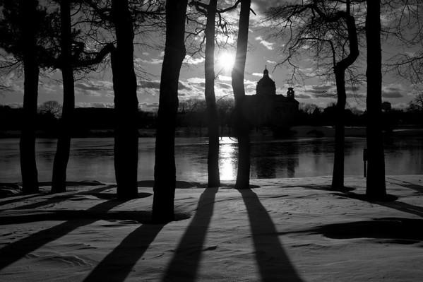 St Catherines Tree Shadows BW DSC_6789
