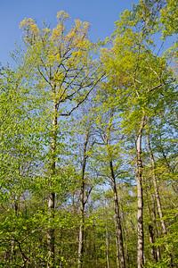 SpringWachungTrees9