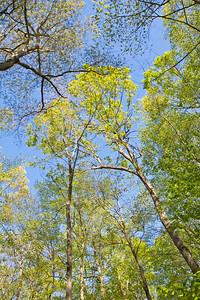 SpringWachungTrees6