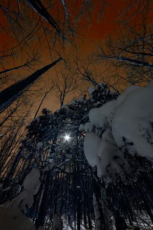 Reservoir Trees Glow DSC_1605