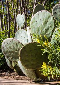 Botanical Gardens 0513-0257
