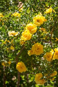 Botanical Gardens 0513-0138
