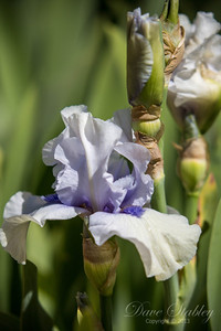 Botanical Gardens 0513-0129
