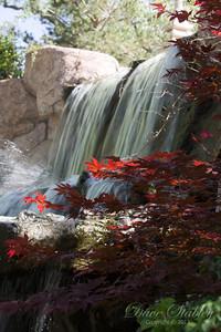 Botanical Gardens 0513-0237