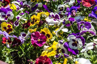 Botanical Gardens 0513-0040