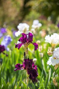 Botanical Gardens 0513-0131