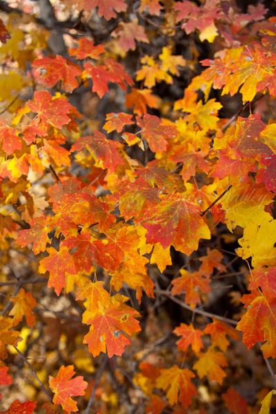 Fall Colors in NM