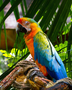 Boomer, this Catalina Macaw, is 27 years old and ready for an afternoon nap.