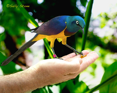 A spectacular bird in the hand...