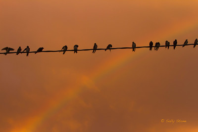 Swallows hang out on the power lines to watch the sunset over Lake Pontchartrain. They clearly have the best view.