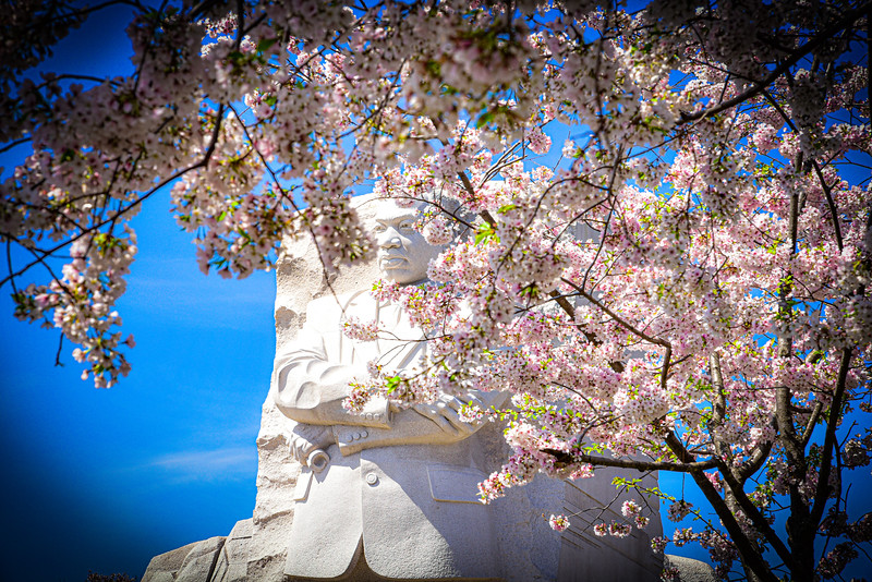 MLK + Cherry Blossoms