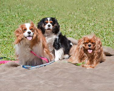 Missy, Josie, and Penny from Maine.  Josie just joined the family after being rescued.