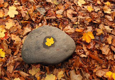 Leaf on Rock - Menomonee River Parkway