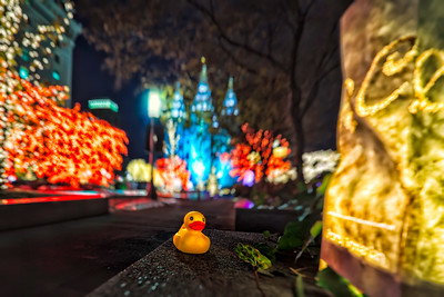 Duck and the LDS temple