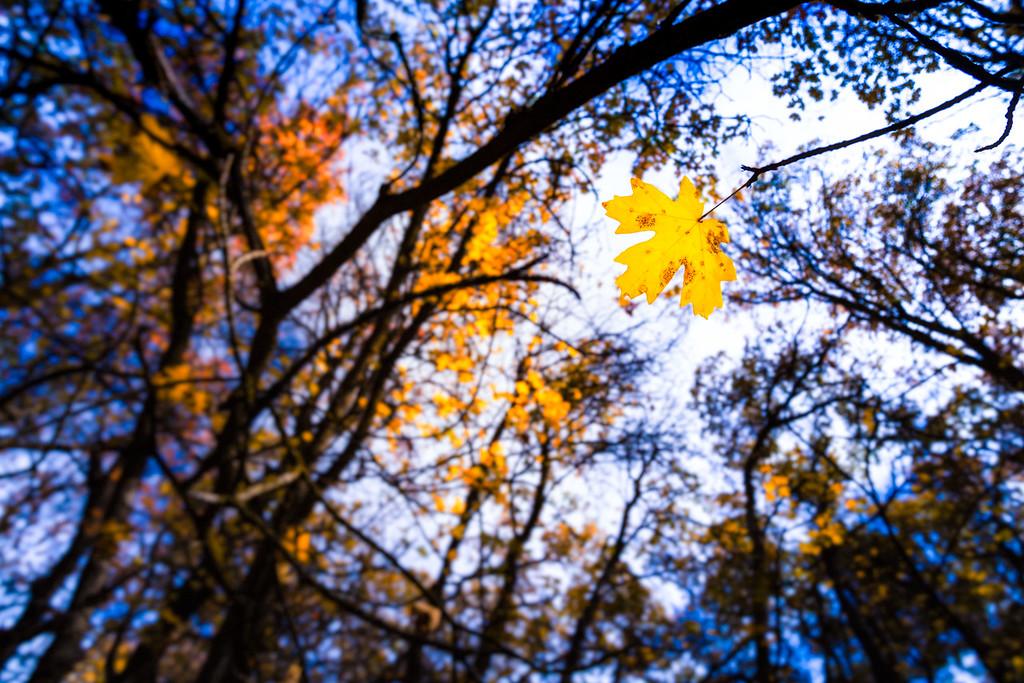 Fall Spot Light