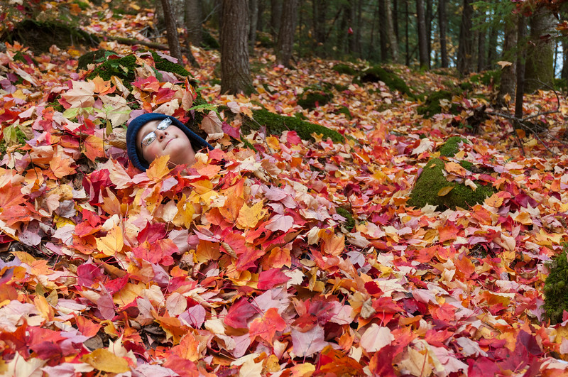 In late October, Andy is buried in autumn leaves along the Trout Pond trail in Lyme.