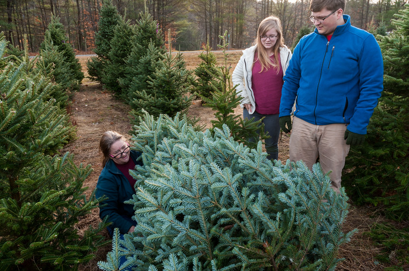 """Pam is """"trapped"""" under our freshly-cut Christmas tree while Mara and John help."""