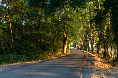 A country lane at sunrise, in Maillane, Provence.