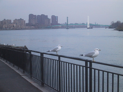 Seagulls at Hell Gate