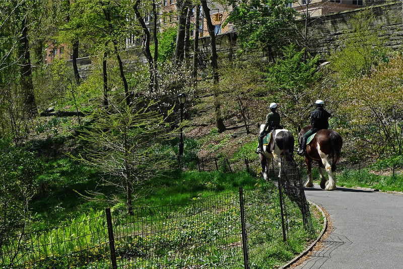Mounted Police - Central Park - 2012