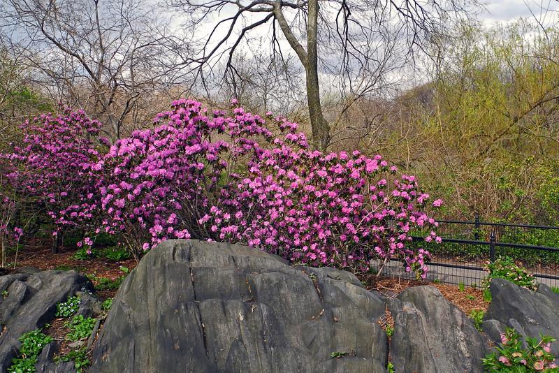 Central Park - 2013