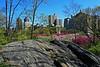 Central Park - 2012