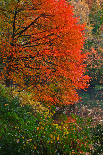 Fall in Central Park - 2009