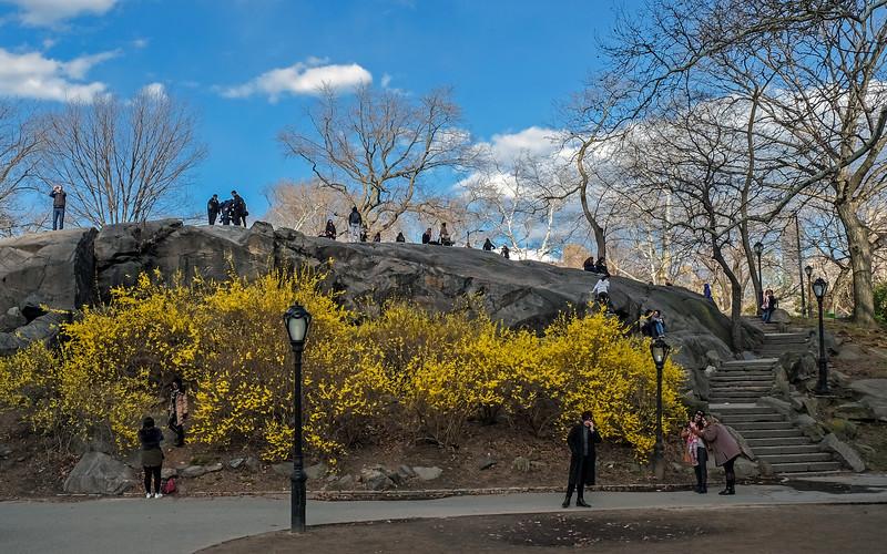 Central Park - 2018