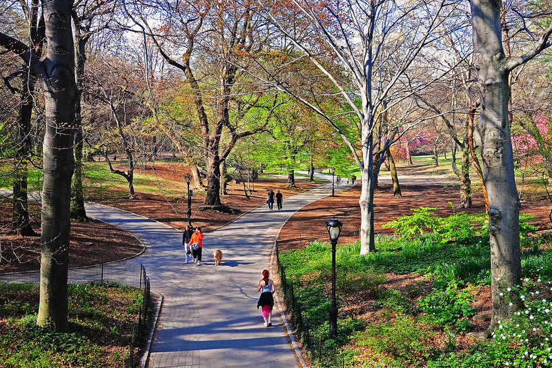 Spring in Central Park - 2009