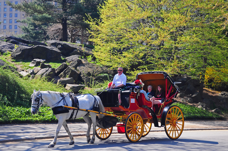 Carriage Ride in Central Park - 2009