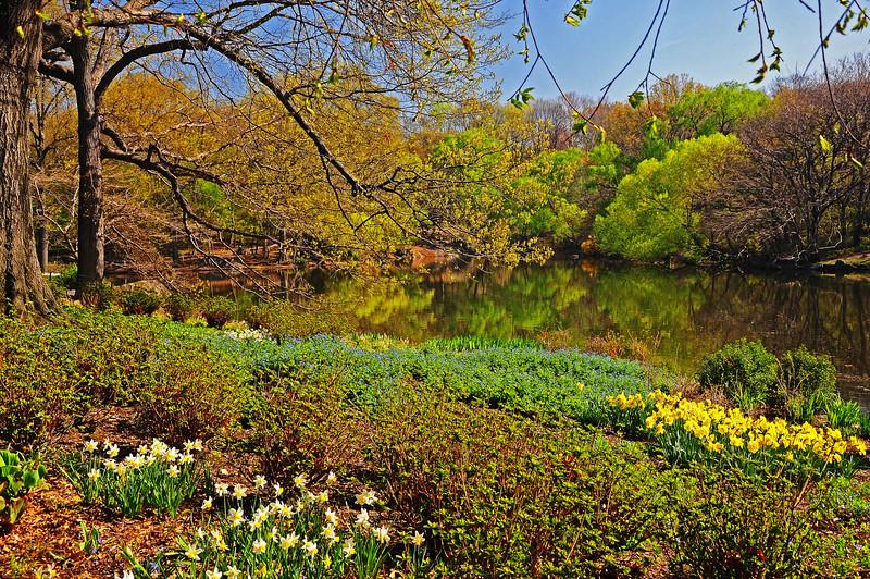 Spring along The Lake - Central Park - 2009