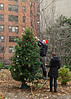 Trimming the tree in Tudor City - 2012