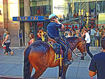 Police Horse in NYC