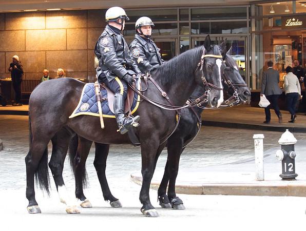 Police Horses Of New York City